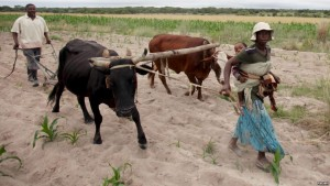 Zimbabwe seeks $1.5bn in drought aid