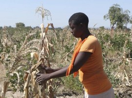 Zim's farm grabs over