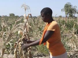 18 000 farmers face eviction