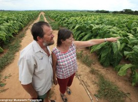 Zimbabwean farming family handcuffed and frogmarched off their land to make way for British doctor