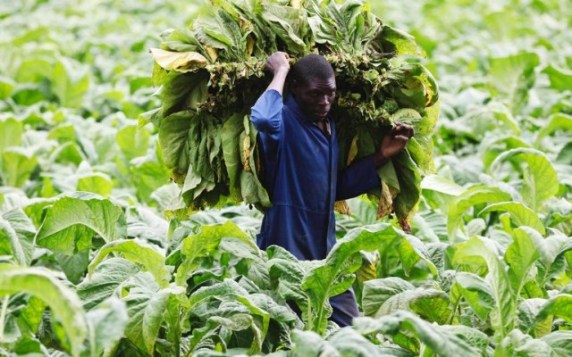 The story of the takeover of another Zimbabwean farm: the McKinnon family